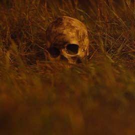 Skull in a field