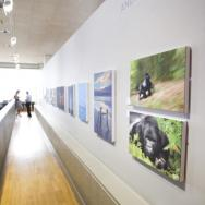 Andy Rouse's exhibition
